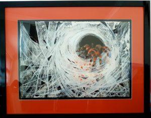 identity thief, tarantula, tarantula art, tarantula painting