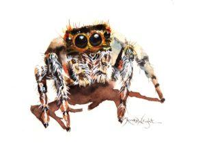 jumping spider, jumping spider art, spider art, spider artist, watercolor spider, watercolour spider, arachnid art