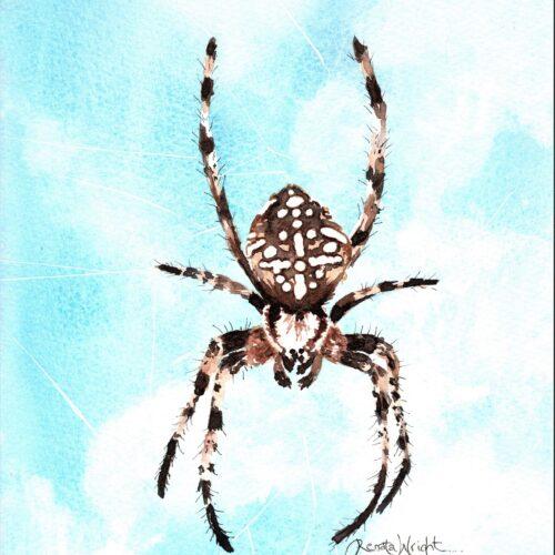 garden spider, european garden spider, araneus diadematus, female spider, spider art, spider artist