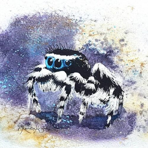 watercolor spider, watercolour spider, peacock spider, peacock spider painting, watercolour paintings by renata wright, renata wright, renata wright art, arachnid