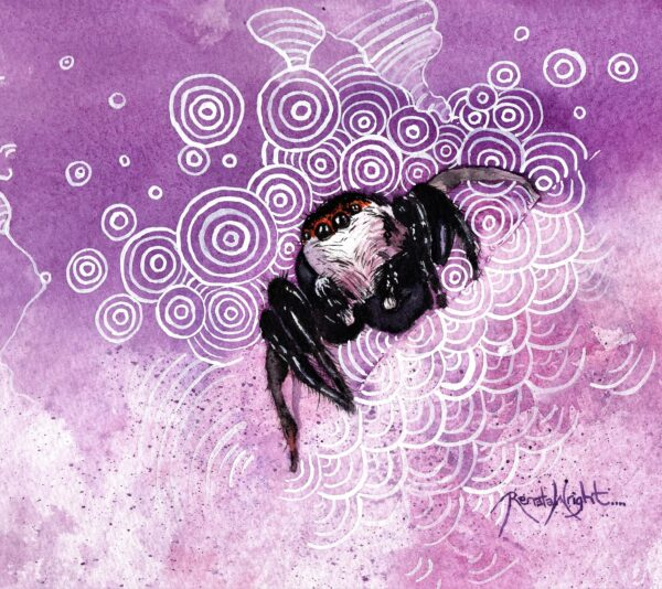 jumping spider, purple background, jumping spider, jumping spider painting, watercolor spider