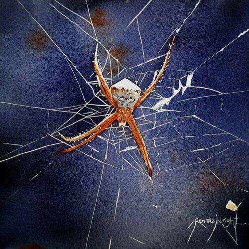 orb, orb spider, orb spider in web, spider web, cobweb, smiling orb spider, spider art, spider artist