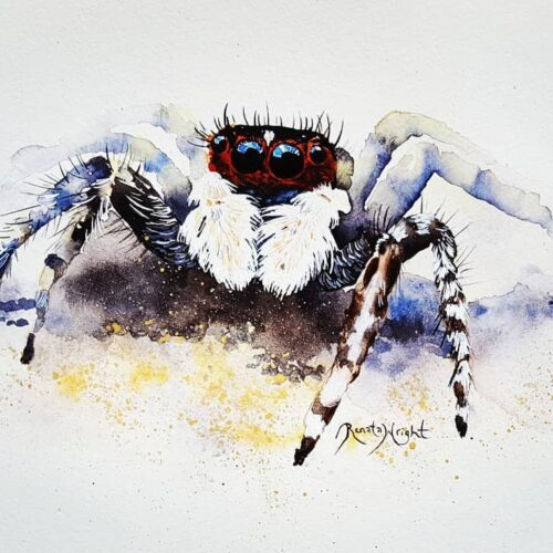 Somersby, jumping spider, jumping spider painting, spider painting, watercolor spider, watercolour spider, watercolour jumping spider, watercolor jumping spider