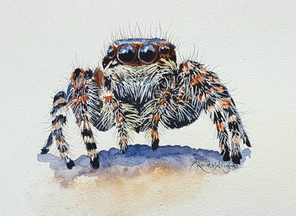 sparky, jumping spider, jumping spider painting, spider painting, watercolor spider, watercolour spider, spider art, spider artist,