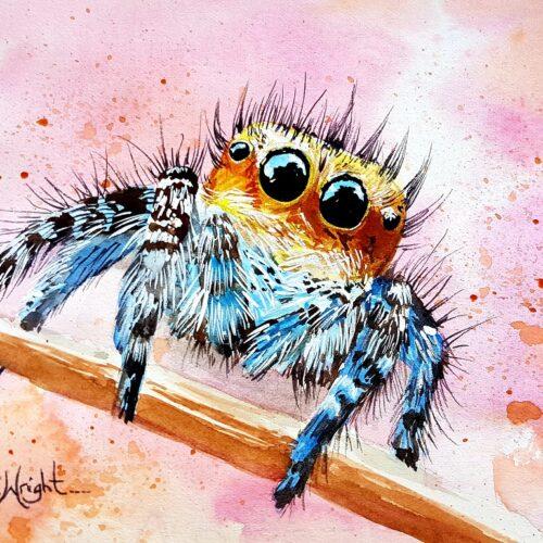 sunny, spider art, salticadae, jumping spider, jumping spider art