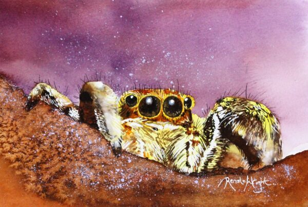 spider, spider painting, watercolor spider, watercolour spider painting, spider art, jumping spider, female jumping spider