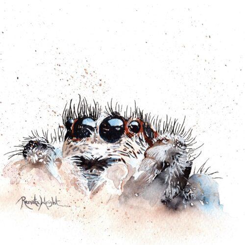 jumping spider, jumping spider painting, spider art