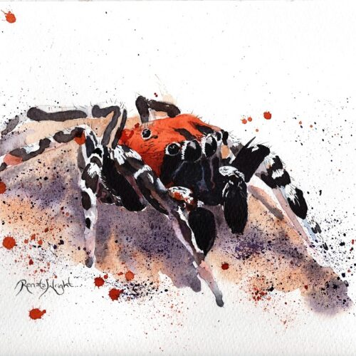 spider art, watercolor spider, watercolour spider, spider painting, arachnid artist, renata wright, renata wright art