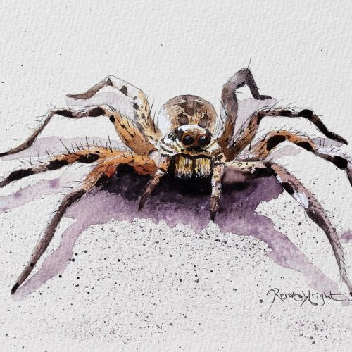 spider art, spider painting, watercolor spider, watercolour spider, arachnid, arachnid art