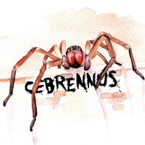 spider, spider art, huntsman, huntsman painting, huntsman art, cebrennus, sparassidae, renata wright, renata wright art