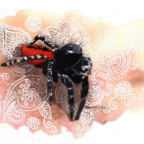 salticadae philaeus chrysops, jumping spider, spider, spider art, spider artist, spider woman, arachnid, arachnid art