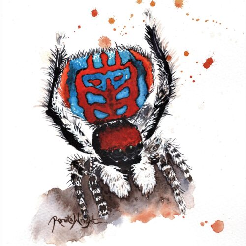 peacock spider, peacock spider painting, maratus bubo, spider art