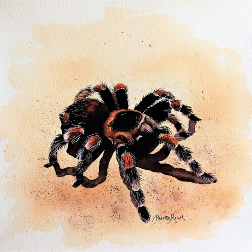 tarantula, tarantula painting, tarantula art, spider art, spider artist, watercolour spider, watercolor spider