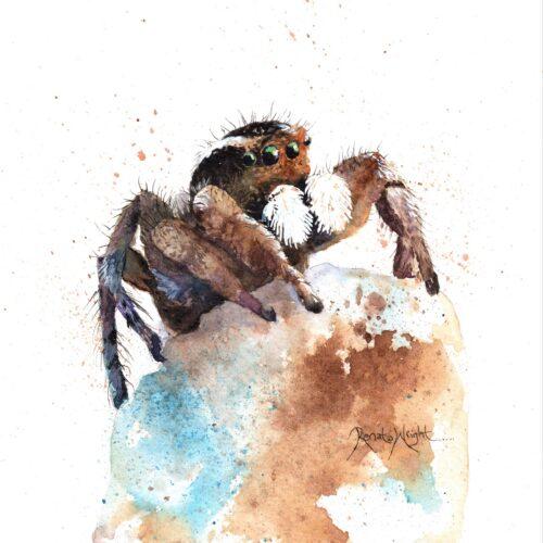 spider art, spider painting, arachnid art, aerillus, renata wright, renata wright art