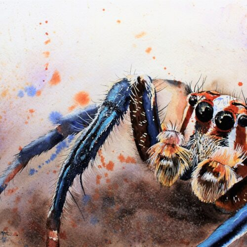 spider art, spider artist, watercolour artist, vegan art, renata wright, renata wright art,