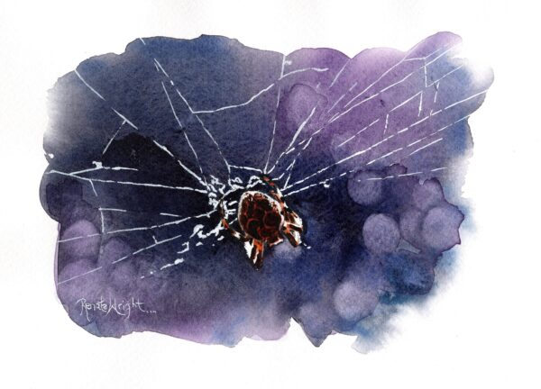 orb spider, watercolour spider, watercolour artist, renata wright, renata wright art