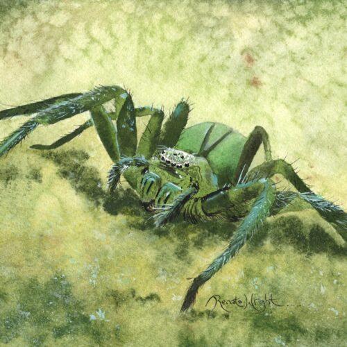 green spider, green spider painting, spider painting, renata wright, renata wright artist
